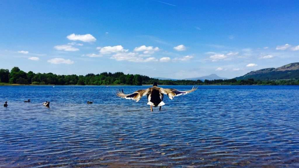 Bird flying over water - activities around lochend chalets