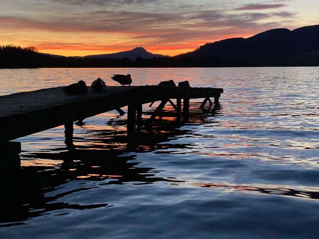Dark jetty with silhouette ducks with orange sunset