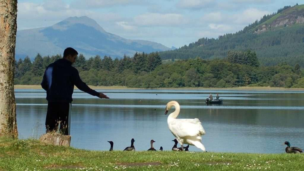 Man feeding a swan on the edge of the Lake